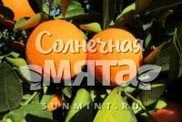 Апельсин Jaffa