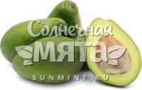 Авокадо Zutano
