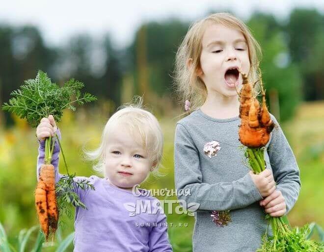 Маленькие дети едят морковь с грядки, фото