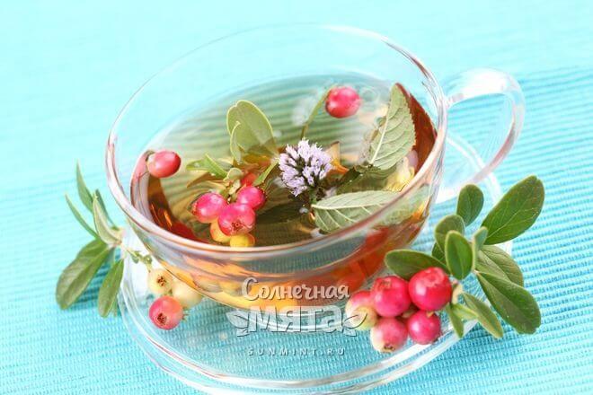 Чай из брусники лечит множество недугов