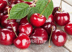 Черешня вишневая «мама»