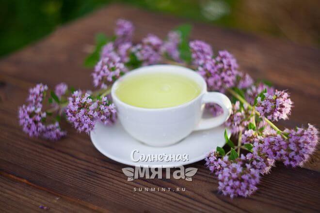 Из орегано заваривают чай