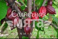 Какао Trinitario
