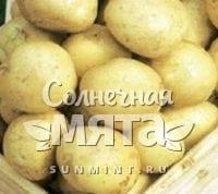 Картофель Огонек