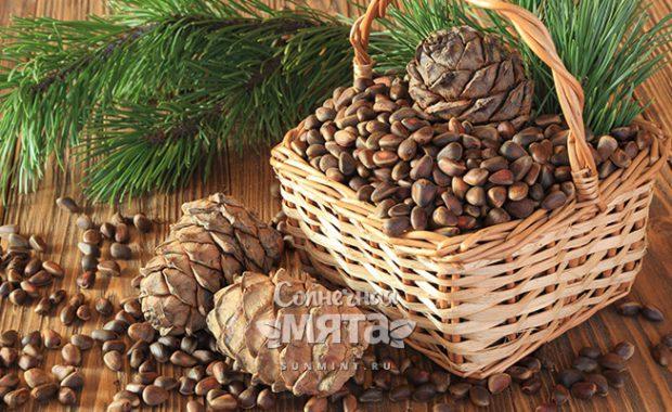 Кедровый орех суровые сибирские семечки