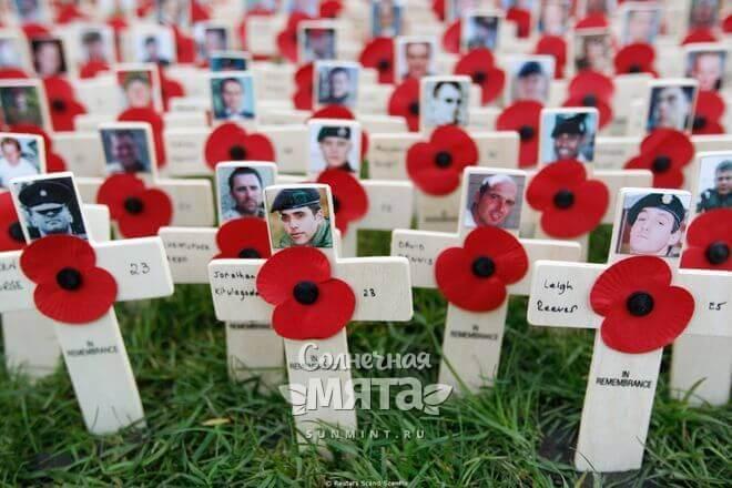 Красный мак - символ погибших на поле боя