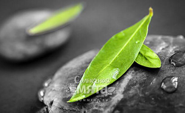 Зеленый листок на влажном камне, фото