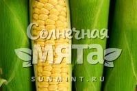 Кукуруза Zea mays ceratina