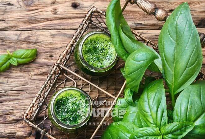 Листья базилика очень полезны для здоровья