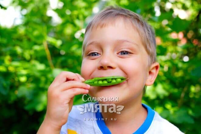 На вкус горох сочный и травянистый