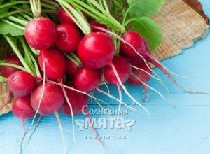 Редис разноцветный космический овощ