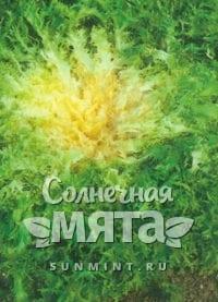Салат листовой Королевский