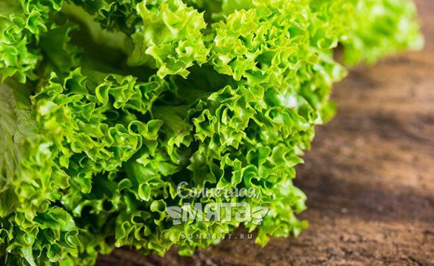 Салат листовой растительное соленое молоко