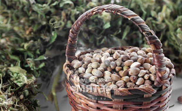 Семена конопли не так страшны, как их малюют