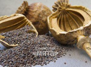 Семена мака укрепляют кости и убаюкивают разум