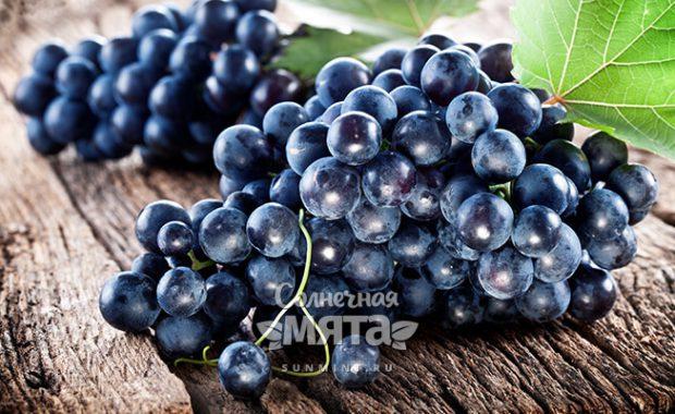 Виноград символ разгула и олицетворение здоровья