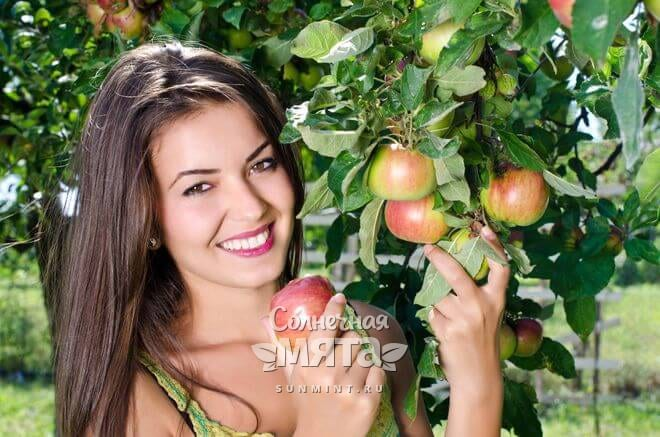 Яблоки растут на деревьях