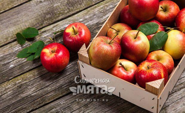 Яблоко персидское, зерненое, глазное, Адамово