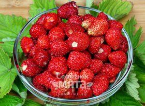 Земляника ягода с запахом мыла