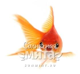 Золотая рыбка, фото