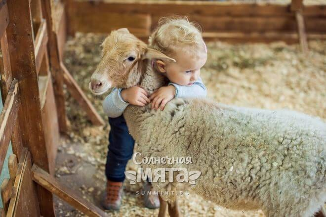 Маленькая девочка обнимает овечку, фото