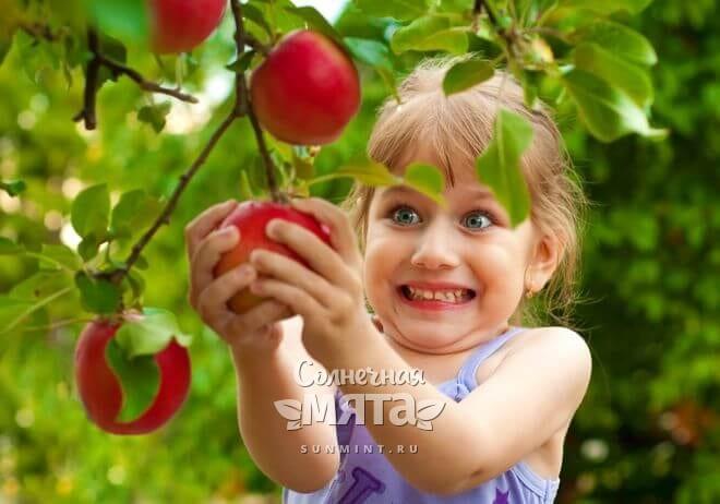 Радостная девочка срывает яблоко с яблони, фото