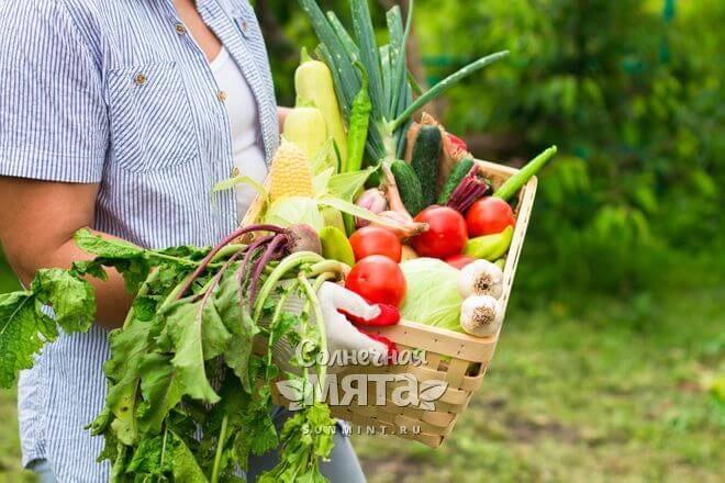 Девушка на огороде несет ящик с овощами, фото